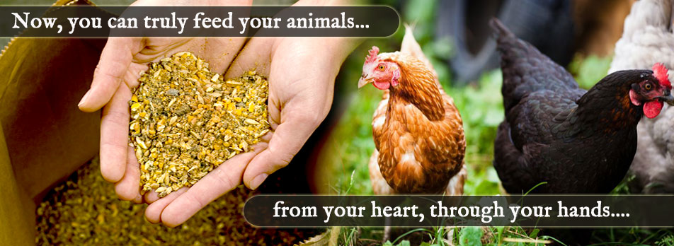 scratch-and-peck-feed-healingthroughout1