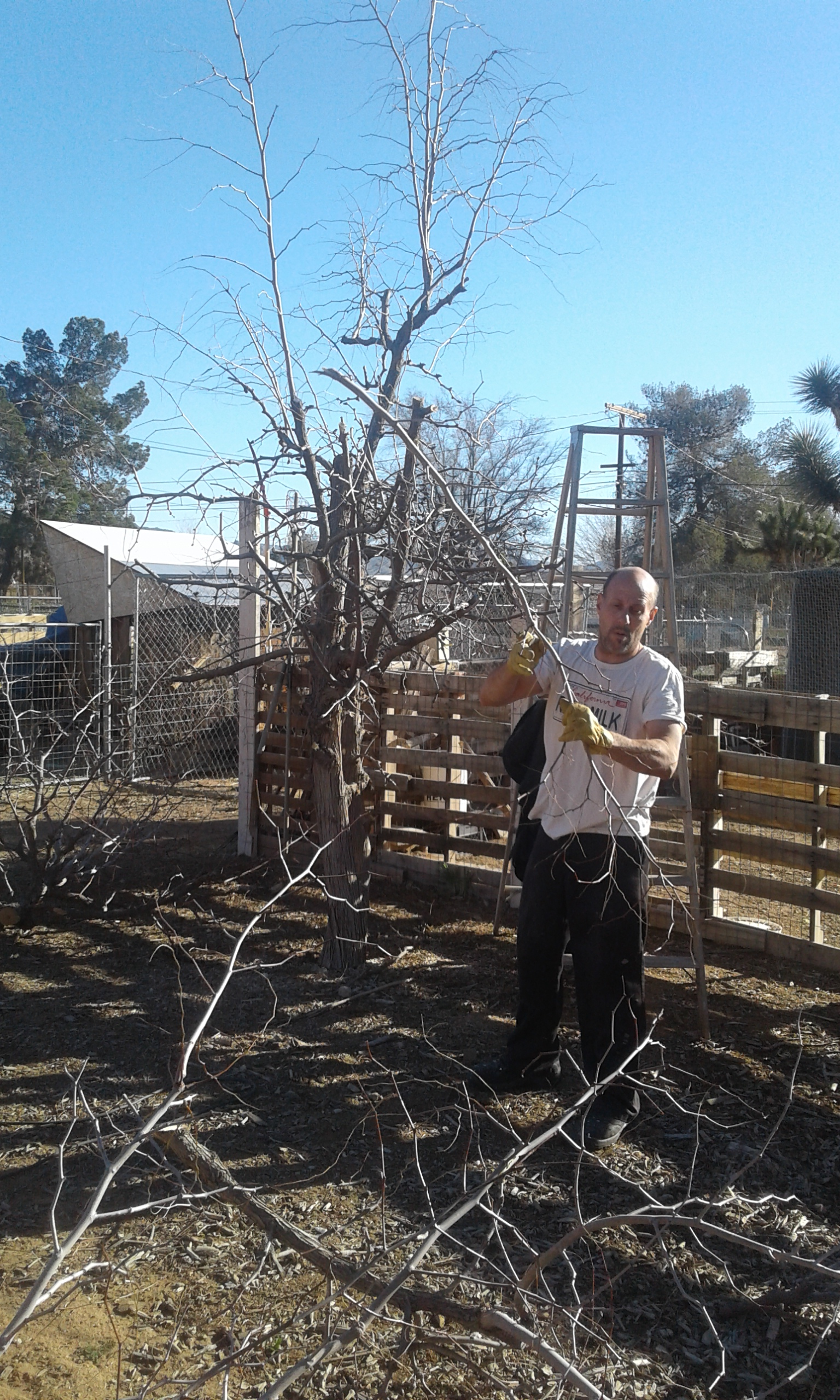 Busy on the homestead preparation day busy on the homestead preparation day - Spring trimming orchard trees healthy ...